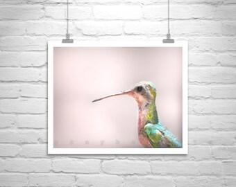 Hummingbird Art, Bird Photography, Pink, Bird Art, Wildlife Art, Cute Animals, Wildlife Photography, Pastel, 5 x 7, 8 x 10, Murray Bolesta