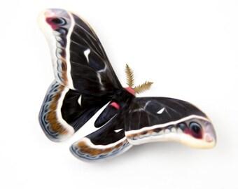 "Calleta Large 5"" Papercut Moth Decoration"