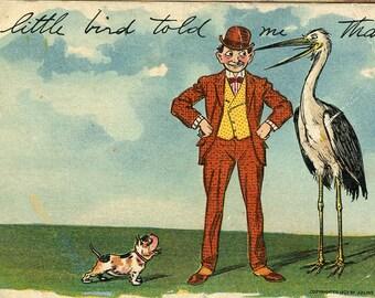 Bulldog, stork crane, man, a little bird told me that Vintage Postcard, Julius Bien publisher, Comic series antique postcard