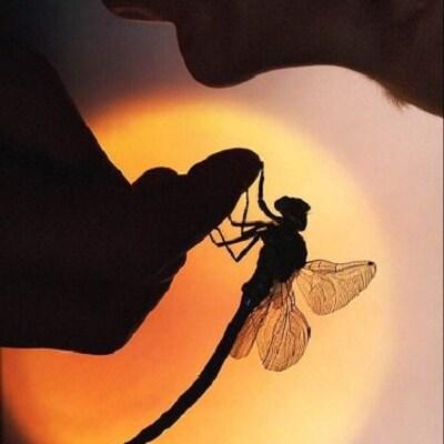 dragonflyridge