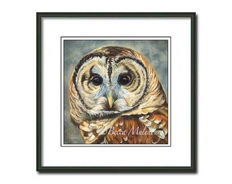 Barred Owl art PRINT birds of prey nature wildlife