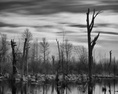 """Landscape black and white photography trees water minimal grey lake - """"The marsh"""" 8 x 10"""