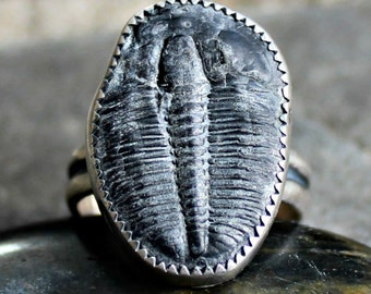 Trilobite Ring - Fossil Ring - Real Fossil Ring - Trilobite Silver Ring - Rustic Ring - Sterling Silver Ring - Fossil Jewelry - US size 9
