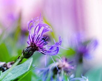 purple flower photo, flower art print, floral photography, fine art, home decor, nature flowers, spring green, summer, bedroom decor violet