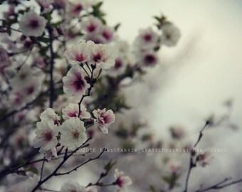BLOSSOM Original Color Fine Art Nature Blossom Flower Photograph