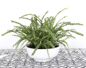 "8"" Modern Planter Bowl - Hanging Planter Supply"