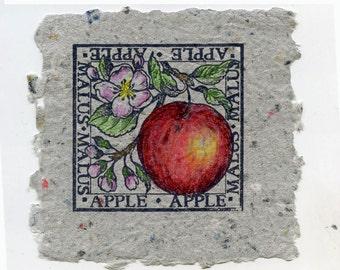 Apples in Gray