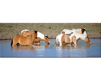 Watering Hole Panoramic Wild Mustang Fine Art Photograph - Wild Horses Photos - Wild Mustangs - Oregon Wild Horses