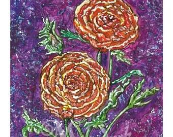 Orange Ranunculus - Art Print