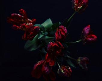 Dark Botanical Dark Floral Red Tulips in the Dutch Style Dark Floral Photography