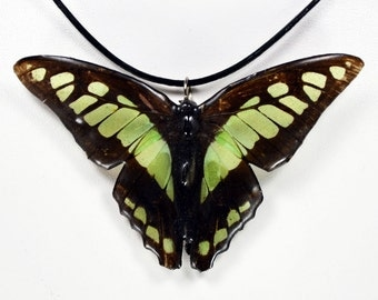 Real Butterfly Necklace - Glassy Bluebottle - Hand Cast Resin