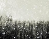 Gray Decor, Nature Photography, Black White Gray Wall Art- Rustic Neutral Winter, Snow Falling on Birches