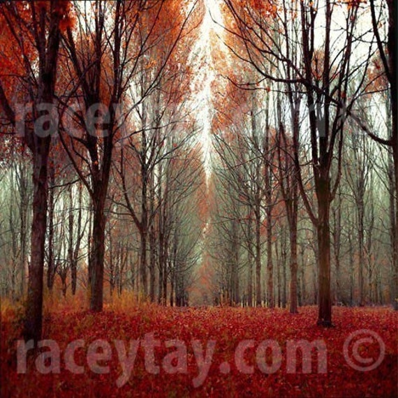 Nature Photography, Rustic Forest, Fall, Orange, Red, Brown, Cabin Decor, Here there Be Dragons