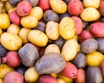 Colorful Potatoes at the Market.  Vegetable wall art or kitchen wall art from food photography.  Fine art for kitchen decor or wall art.