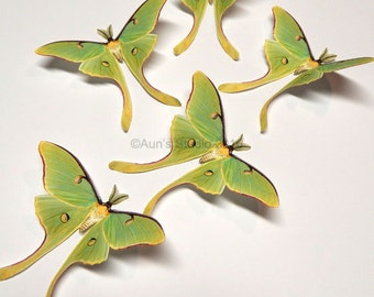 Life-like Paper Butterfly Cutouts - Luna Moth - 5 pieces