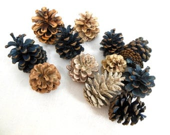 Pine Cones for Crafting Bleached and Indigo Dyed Assortment