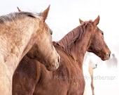 Horse art, gift for her, photograph, 16 x 24, large canvas print, equine art, home decor, horse decor, horse wall art, southwestern decor