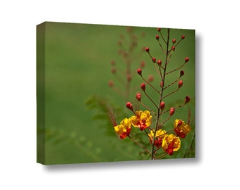 Small Canvas Wall Art Decor Mexican Bird of Paradise Flower