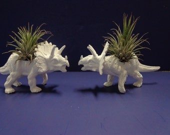 Set of 2 small white dinosaur planters with mini air plants.