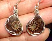 STERLING Handmade Wire Wrap AMMONITE Fossil Earrings