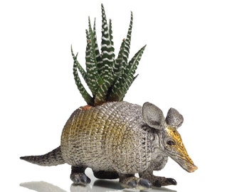Sydney the PLANTED armadillo