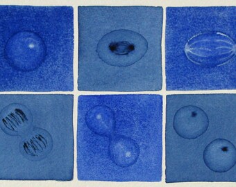 Dark Blue Mitosis  - original watercolor - cell cycle