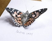 Pop-up Butterfly Card - Painted Lady