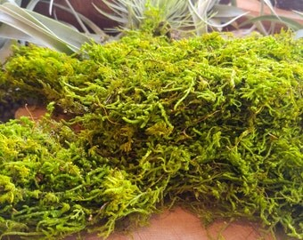 Preserved Moss for your Terrarium or Fairy Garden - Excellent in air Plant Terrariums! Bright Green Moss, Terrarium Supplies