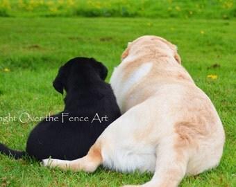 Labrador Best Friends Photo Greeting Card  Dog Portrait Card