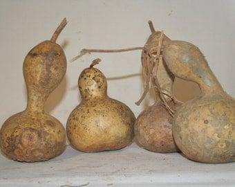 Smaller Bottle gourds for sell