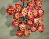 20 Natural Dry Roses - Natural Color - Roses for Weddings, Luck, Love, Romance and all other Matters of the Heart