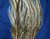 Natural Thin Silver Badger Rooster Hackle Feathers - Hand Selected - Lot of 50