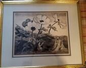 Antique Vintage Framed  Engraving. Signed. Listed Artist. Ethel Parsons Paullin. Consider Lilies