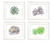Succulent print set of 4, A4 size botanical art, succulent watercolor painting, nature, living room wall art, contemporary prints