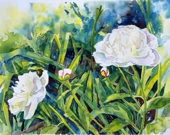 White Peonies, Back Yard, original watercolor painting, 11 x 15 inches, cream, white, greens, blues, botanical painting, flowers, foliage