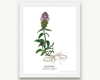 Botanical Self-Heal Print - Unmatted