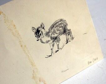 original pencil drawing of deer fawn by eileen soper
