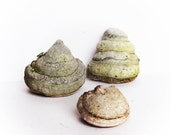 Woodland photo session accessories Dried tree fungus 3pcs Organic decor for craft projects Fairy garden decor Dry mushroom