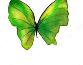 """spring green and yellow butterfly  8 X 10"""" original watercolour painting"""