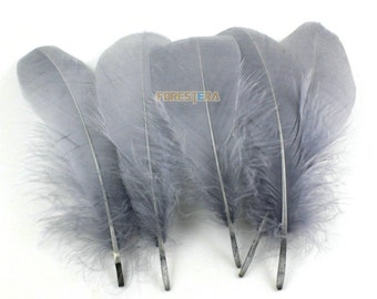 50 Pieces Gray Feather 10-15cm (YM109)