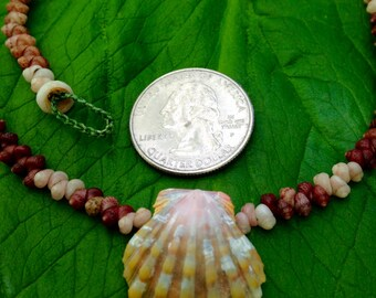 Sunrise Shell Lei - Sunrise Shell Necklace Shells Beach Jewelry Eco-Friendly Collected Rare Shells Island Mermaid Style Aloha Gift Reef Gems