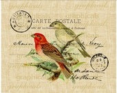 Red green bird instant clip art French ephemera graphic digital download image transfer for iron on burlap decoupage paper pillow tote 2284