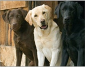 Pack of 4 Dog Puppy Labrador Retriever Puppies Dogs Stationery Greeting Notecards / Envelopes Set