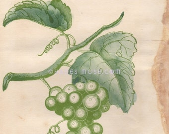 15% OFF Flower Of Consolation-Hope-Cherish This Flower-Adversity-Victorian Poem-Green Grapes-1847 Antique Vintage Art Print-Goth Picture-Eng