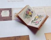 PDF Vintage Botany Book for Dollhouse Miniature 1/12 Scale DIGITAL DOWNLOAD