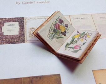 PDF Vintage Charles Morren Botany Book for Dollhouse Miniature 1/12 Scale DIGITAL DOWNLOAD