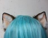 dark brown kitten ears