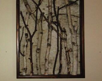 Framed Birch, Bark, Sticks