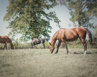 Horse Photography, Polo Pony Art, Farm Wall Decor, Rural Nature Photograph, Brown and Green Landscape Artwork, Rustic Animal Picture