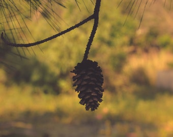 Pine Cone, Woodland, Nature Photography, Fine Art Photography, Glossy, 8X10, Matted